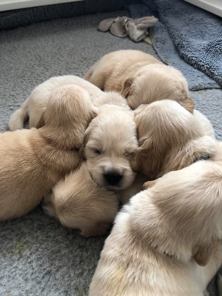 Picture of pups